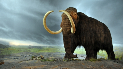 Replica of a Woolly mammoth