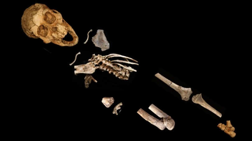 top down photo of a partial skeleton on a black background